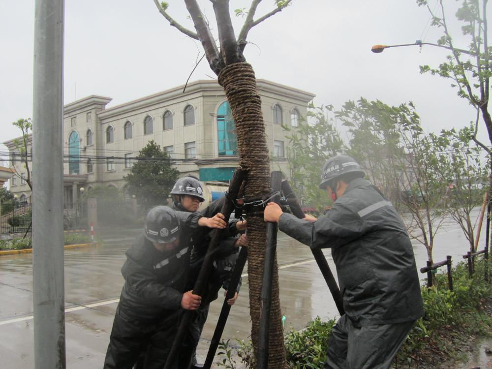 干窑镇行政执法中队队员合力扶正倾倒树木