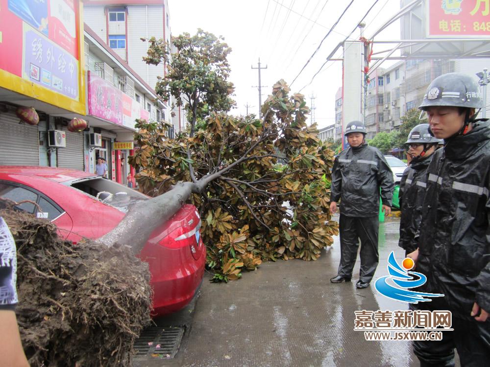 台风来袭,顷刻将树连根拔起,压碎了停在一边汽车的后窗玻璃