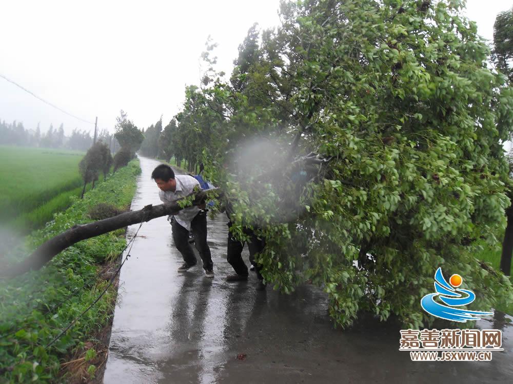 西塘镇礼庙村干部群众合力保证村路畅通